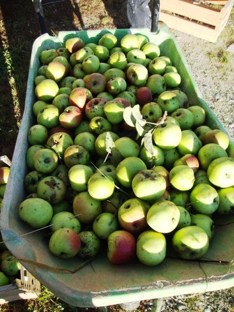 appels uit eigen boom