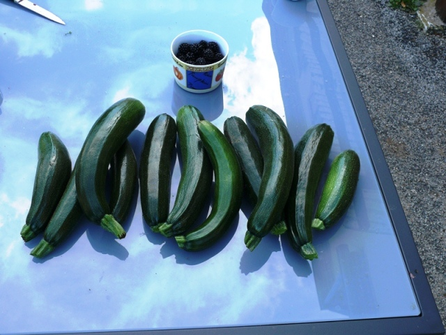 courgette in overvloed